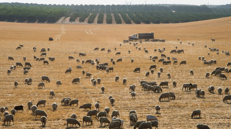 'We can adopt regenerative agricultural solutions to help us to live in balance with the environment on which we all depend for our survival.' Photograph: Robyn Beck/AFP/Getty Images